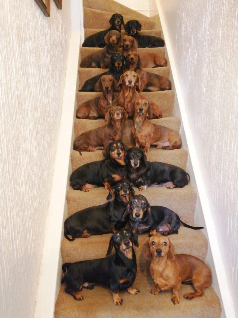 dogds